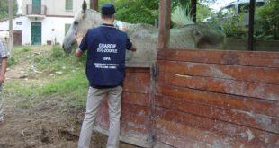 Aggredito dai titolari, perchè aveva denunciato le torture ai cavalli