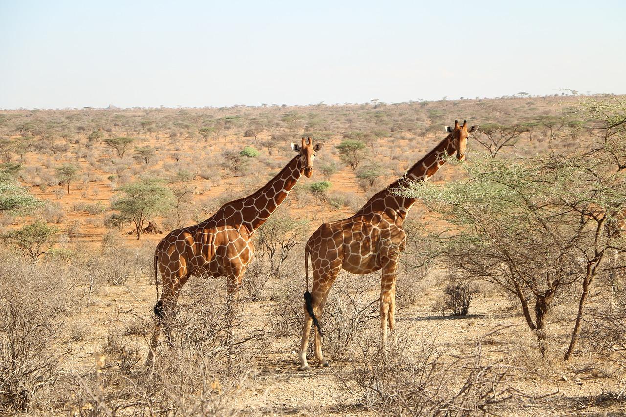 Look safari