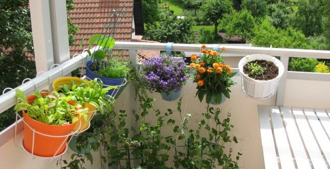 Giardino Sul Balcone Di Casa : Creare un angolo verde sul balcone come fare news l